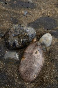 珪化木 - こんなものを見た2