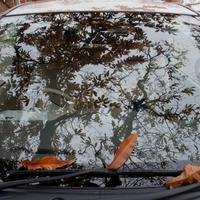 落ち葉 - いつもの風景