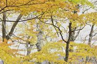 お初  通えなくなるなぁ… 船形山 - tabi & photo-logue vol.2