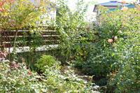 2017年 10月末の庭 - my small garden~sugar plum~