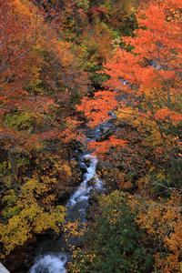 思いがけず最盛期の紅葉に遭遇八幡平から乳頭温泉へ - ちゅらかじとがちまやぁ