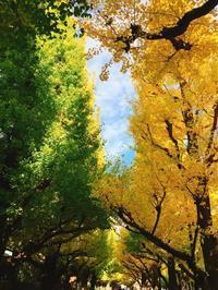 秋の風物詩♡ - marry's  naturalhappy diary