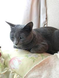 ブログのお引越し - 猫達との生活など