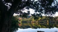 鏡山公園の散歩 - Tea's  room  あっと Japan