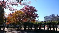 『西条公会堂』ランチ - Tea's room  あっと Japan