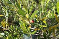 暖かい小温室へ・花の家情報 - 手柄山温室植物園ブログ 『山の上から花だより』