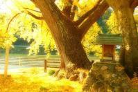 秋の舞台 - たちばな*つれづれ日記