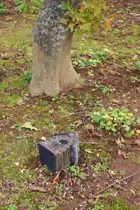 小さな紅葉をお庭で楽しむ - ペコリの庭 *