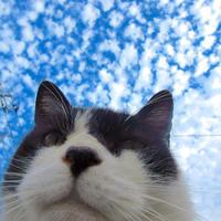 秋の空とG - にゃルニア日記