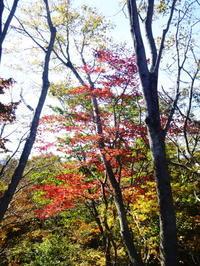 今日のお気に入り写真 小津権現山 (1,157.8M)  に登る - 風の便り
