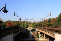 公園の秋 - お散歩写真     O-edo line