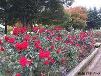 バラ園 - 金沢市 床屋/理容室/散髪  「ヘアーカット ノハラ ブログ」