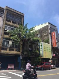 台南観光(神農街&太古珈琲) - しっかり立って、希望の木