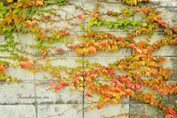 秋 日 和 - 木の葉のオト