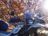 ツーリングセローで行く晩秋のお散歩 - 風と陽射しの中で ~今日はバイクで何処に行こう!?~