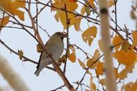 厳つい顔登場 ^^; - 北の大地で野鳥ときどきフライフィッシング