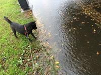 雨の中の散歩 - My Photo Album