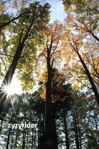 緑色と茶色の葉っぱ - ジージーライダーの自然彩彩