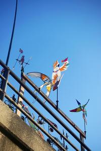 潮騒の街から - パサデナ日和