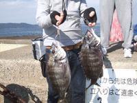 爆釣!こんな日もあるんですね。 - 76歳 車いす釣師 博多湾ピンポイント奮闘釣り日誌