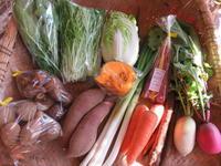 今週の野菜セット(11月1週目)とゴボウと餃子 - まるみど農園のあれこれ日記