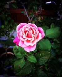 *本日11/4土曜日は〜 - salon de thé okashinaohana 可笑的花