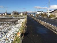 雪つもりました - 柴犬さくら、北国に生きる