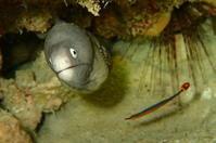 17.11.4小夏から一転。。 - 沖縄本島 島んちゅガイドの『ダイビング日誌』