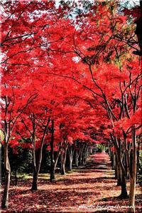 真紅のタイムトンネル (平岡樹芸センター) - 北海道photo一撮り旅