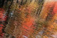 楓蔦黄 - 君がいた風景