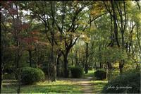 大阪城公園にて コマドリ - 今日のいちまい