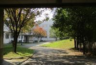 キャンパスの清掃活動を終え 梅ちゃんの所へ - 島暮らしのケセラセラ