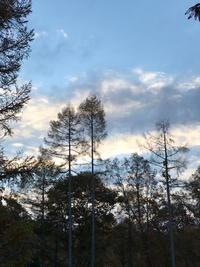 錦秋の森 - 木洩れ日の森から