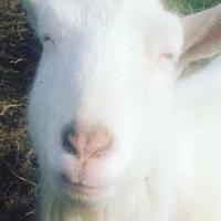 「歩荷感謝祭2017」 - 自然卵農家の農村ブログ 「歩荷の暮らし」