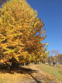 蓼科高原チェルトの森オーベルジュシャレーグリンデル - 蓼科高原オーベルジュ シャレーグリンデルで四季を愉しむ