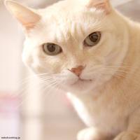 【猫の室内飼いの工夫】猫の骨折予防で取っ手を変更 - 賃貸ネコ暮らし|賃貸住宅でネコを室内飼いする工夫