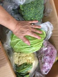 新鮮で元気な大きな野菜 - 嵐の中でダンスを