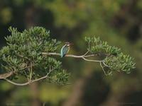 野鳥撮影 - ともアルバム