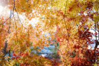 みずがき湖の紅葉 - Photographie de la couleur