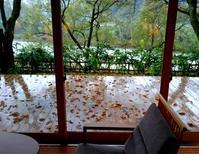 雨の日と落ち葉 - 金沢犀川温泉 川端の湯宿「滝亭」BLOG