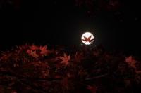 紅葉 × 十六夜 (いざよい) - 君がいた風景