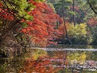 神戸市立森林植物園・長谷池の紅葉(1) - たんぶーらんの戯言