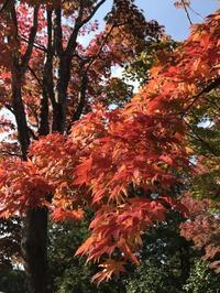 昭和記念公園の日本庭園 - まましまのひとり言