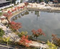 「近くの公園」のサクラの紅葉 - 楽餓鬼