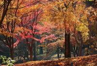 紅葉は逆光で写すべし - 上州自然散策2