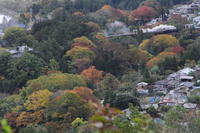 色づいた浦山川 - 秩父・2017年秋 - - ねこの撮った汽車
