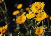 庭の花たち - 風の吹くまま