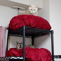 2段ベッドとしゃべるにくまんポンコ - 賃貸ネコ暮らし|賃貸住宅でネコを室内飼いする工夫