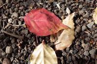 我が庭の小さすぎる秋 - もるとゆらじお