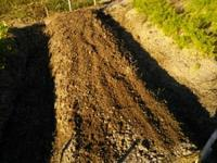 そして、玉ねぎ植え付け完了!(南国畑) - 化学物質過敏症・風のたより2
